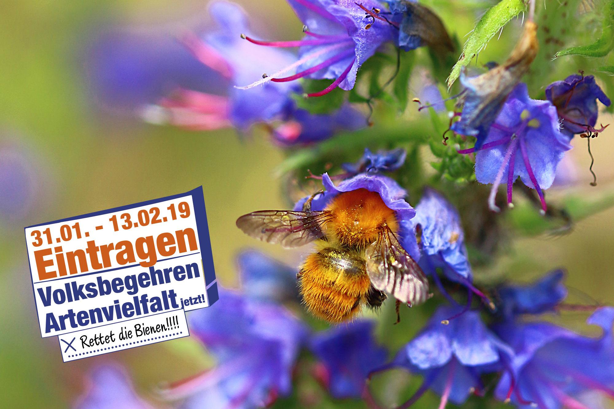 """Bienen Volksbegehren"""": Gespräch mit Alois Glück nach"""