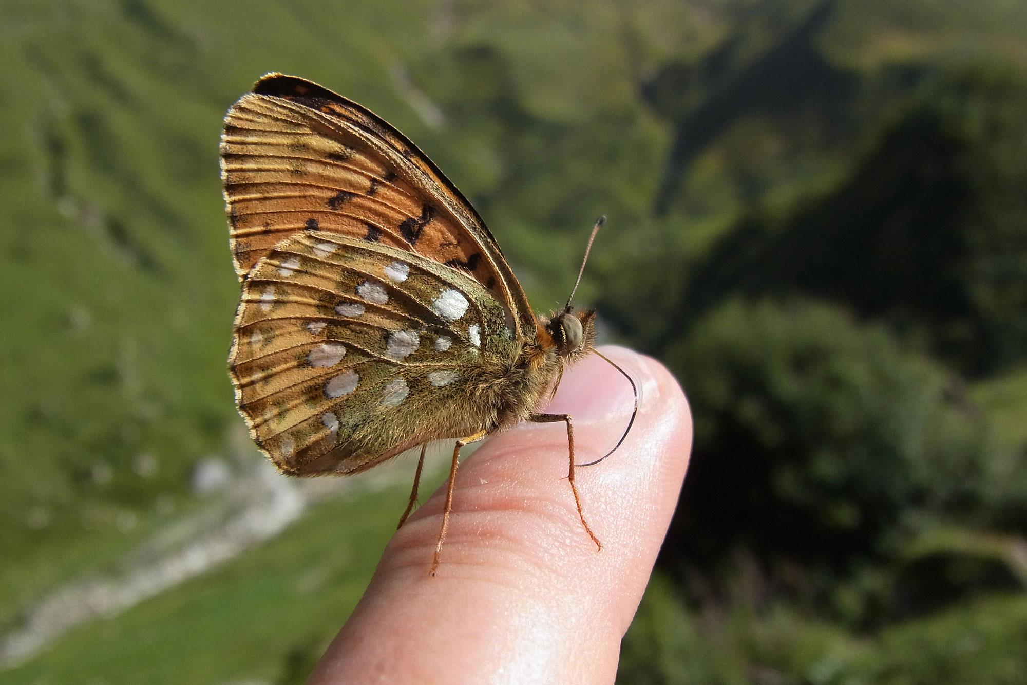 Erfreut Kupferdraht Insekten Ideen - Elektrische Schaltplan-Ideen ...