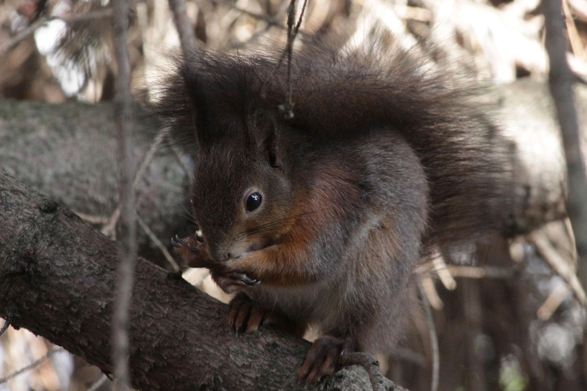 Eichhörnchen - LBV - Gemeinsam Bayerns Natur schützen - LBV