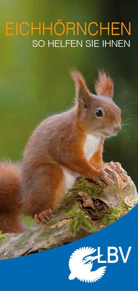 Eichhörnchen Im Garten : eichh rnchen im garten lbv ~ Watch28wear.com Haus und Dekorationen