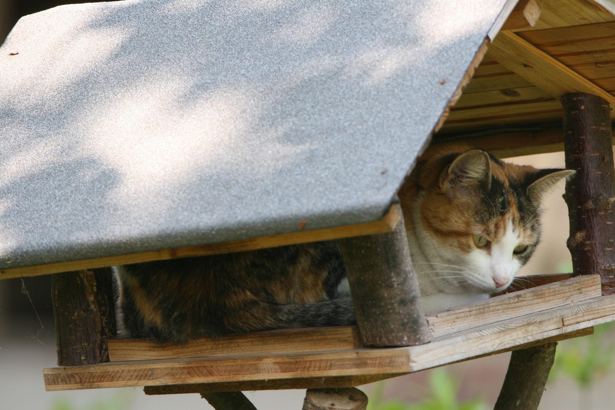 Katzen und Vögel: Tipps für Garten- und Katzenbesitzer - LBV
