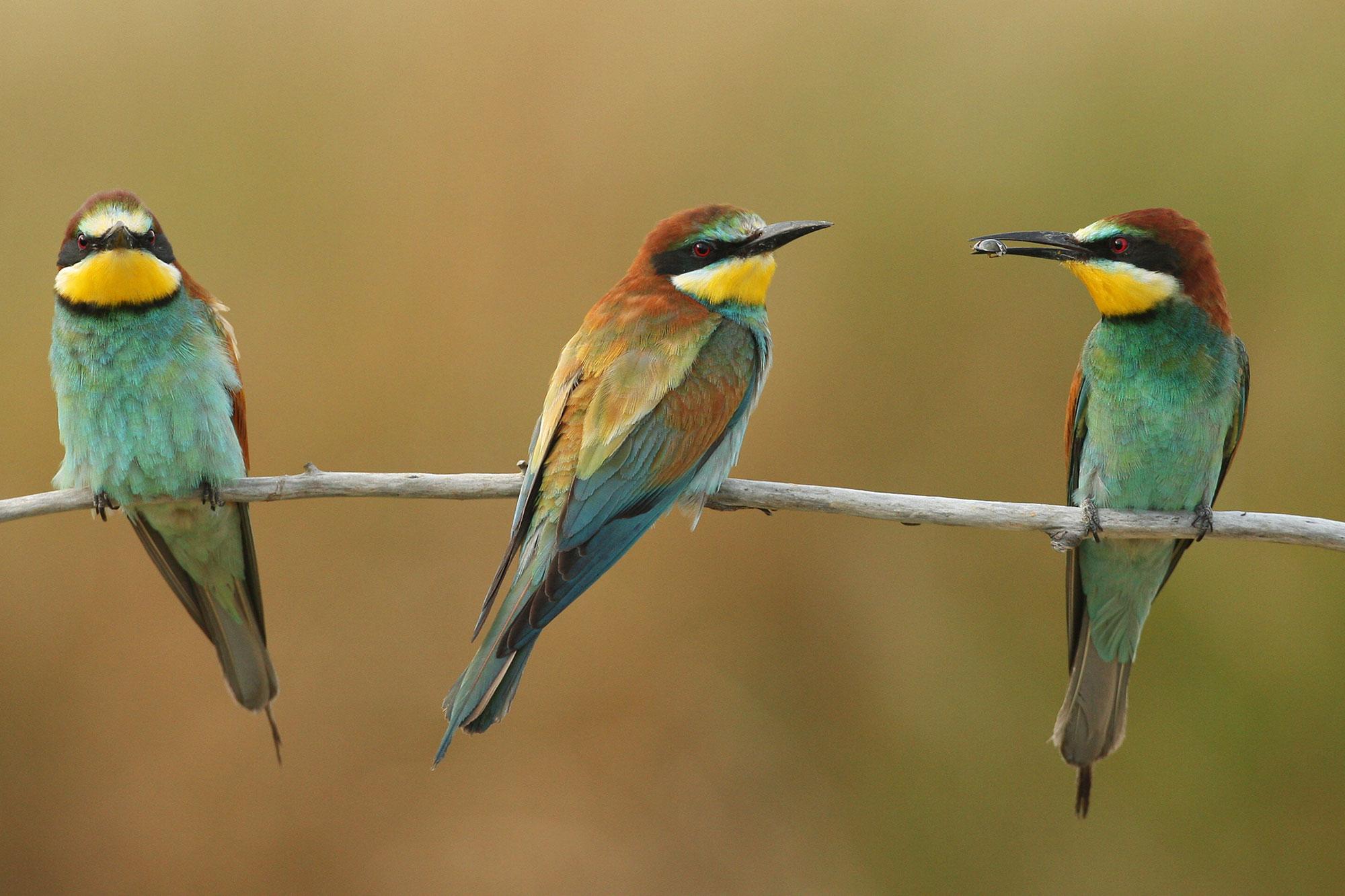 Vogelbeobachtung: ausrüstung bestimmungshilfen und tipps lbv