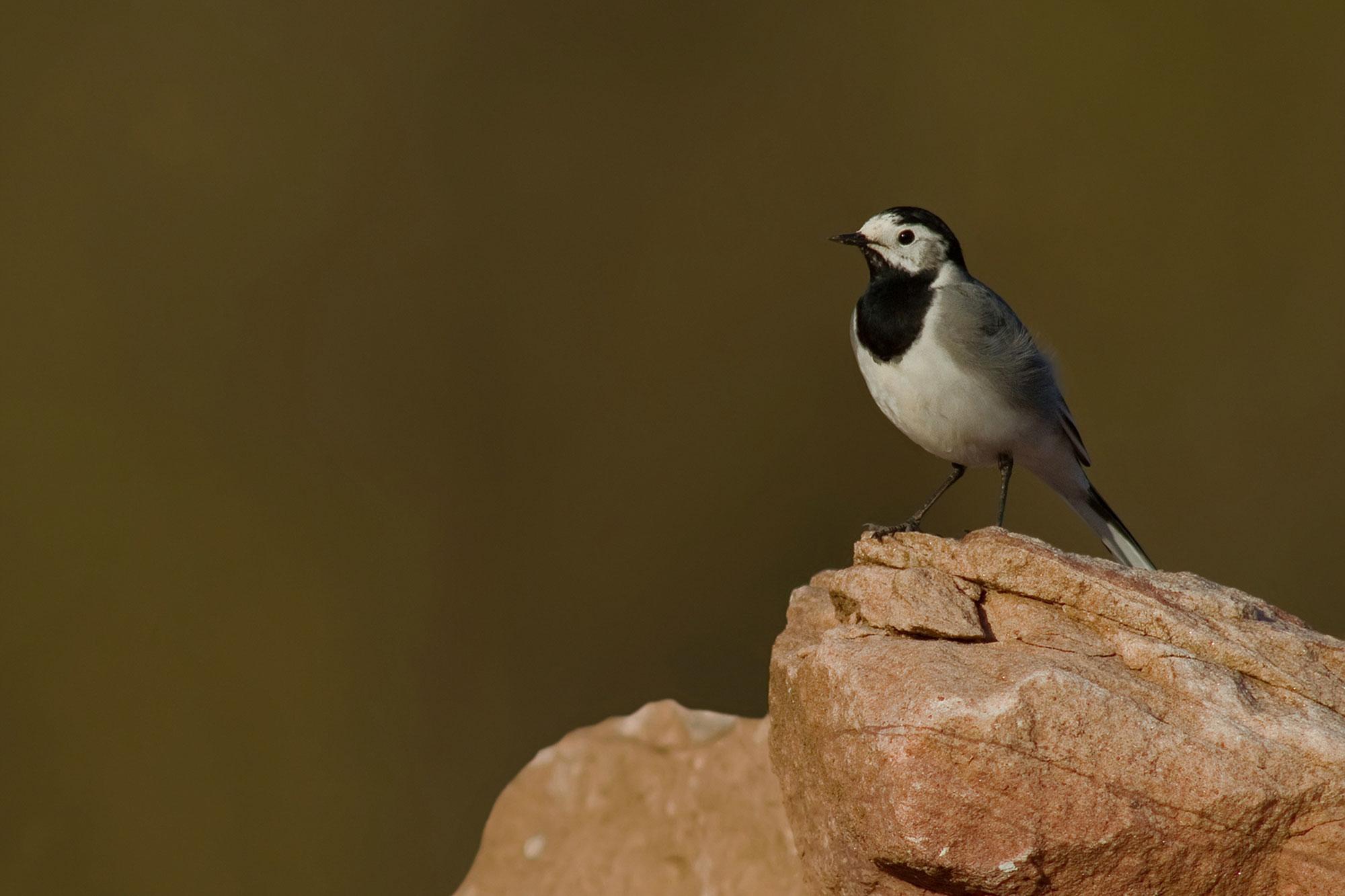18f72c9dbba Die 30 häufigsten Gartenvögel - LBV