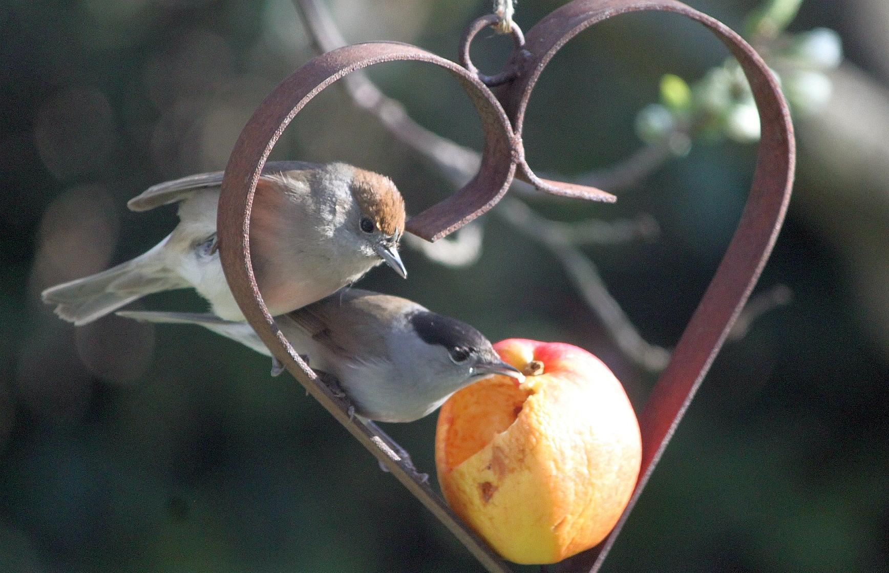 monogame vögel