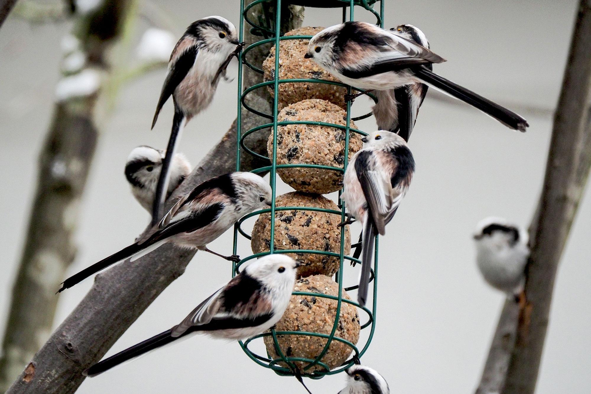 Die Haufigsten Fragen Antworten Rund Um Vogel Futtern Lbv Gemeinsam Bayerns Natur Schutzen