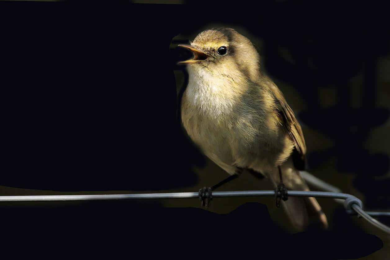 Warum Singen Vogel Eigentlich Lbv