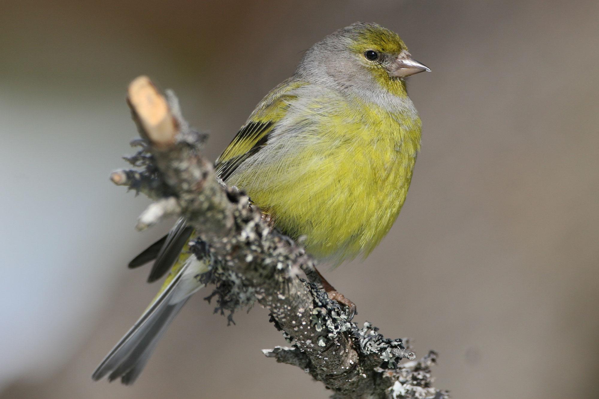 Vogelbeobachtung datiert
