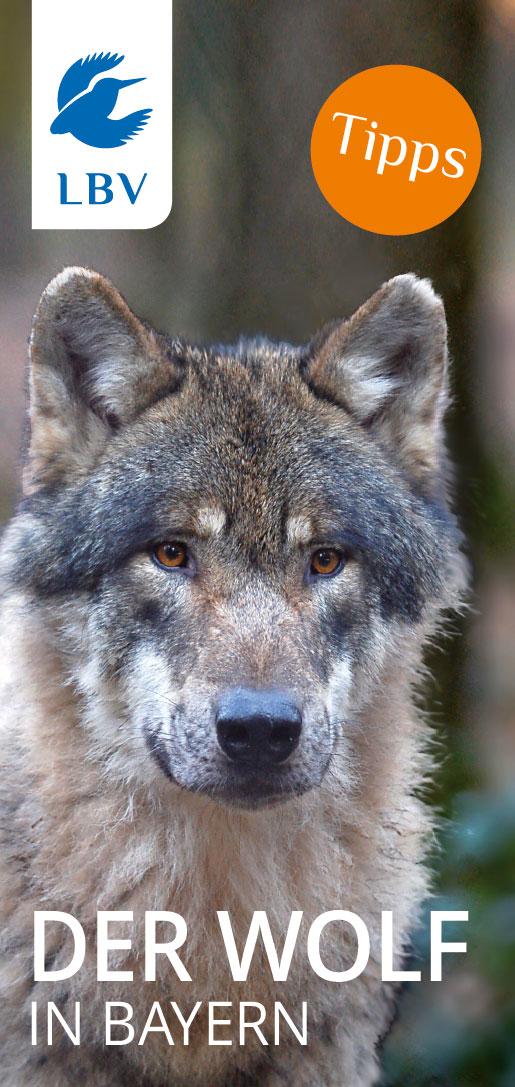 Wolf Schutz In Bayern Lbv