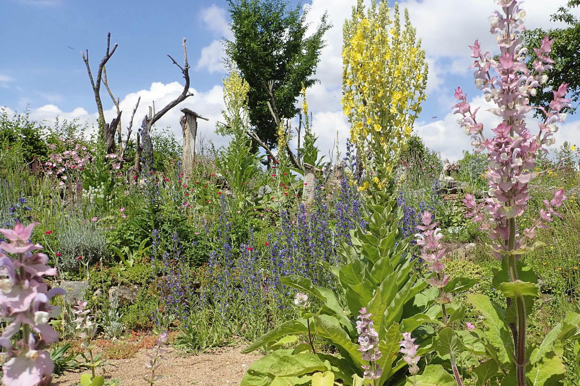 12+ Der Garten im Klimawandel   Vorbereitung auf trockenere Zeiten ... Fotografie